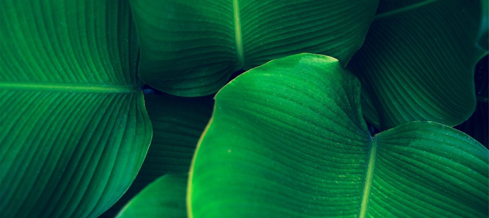 EnergyGO - Energía 100% verde para pagar menos en tu factura de la luz