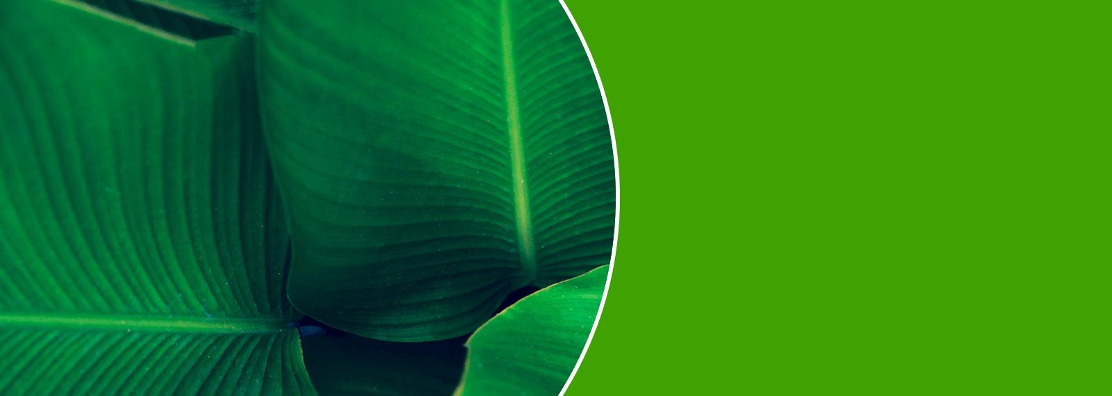 EnergyGO - Energía 100% verde a precio de amigo